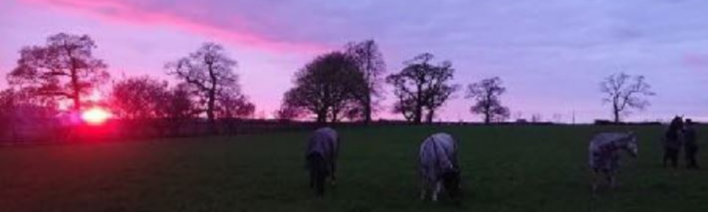 Horses in field in evening pink sky