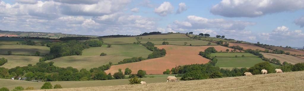 Hills with sheep grazing